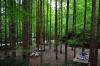 산림청 '산림으로 국가부강을 숲으로 국민행복을'
