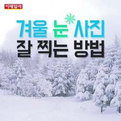 [카드뉴스] 올해 첫 대설주의보..눈(雪) 사진 잘 찍는 방법
