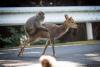 `이게 가능해?`…짝짓기 하는 원숭이와 사슴