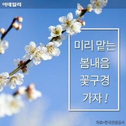 [카드뉴스] 미리 맡는 봄꽃 내음, 꽃구경 어디로 갈까?