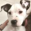 `귀에 얼굴이 하나 더?`…본인 닮은 귀 얼룩 지닌 강아지 `눈길`