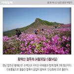 [카드뉴스] 올 봄 떠나고 싶은 봄꽃 여행지 추천