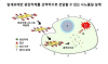 서울대연구팀, 암세포만 골라 죽이는 기능성 물질 개발