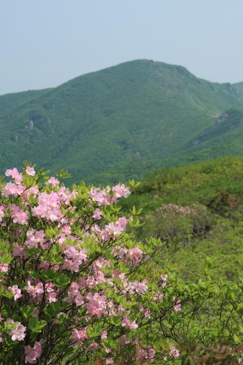 봄의 절정서 즐기는 소백산 ..