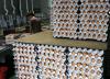 [살충제 계란]출하·판매 전면 금지…계란값, 폭등할까