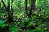 [제주의 속살③] 숲에 물들어 자연을 닮아가다 '환상숲 곶자왈'