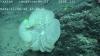 태평양 해저생물, `흰색 해면`