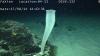 [포토]태평양 해저생물, `길고 가는 해면`