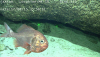 [포토]태평양 해저생물, `귀여운 물고기`