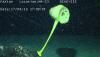 [포토]태평양 해저생물, `노란 해면`