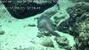 `아귀를 닮았네`…中 원격 무인잠수정, 태평양 심해서 해양생물 발견