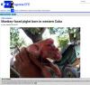 쿠바서 원숭이 얼굴 가진 돼지 탄생…`긴 턱에 큰 콧구멍까지`