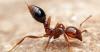 '살인개미' 공포 1주일..풀리지 않는 3대 미스터리