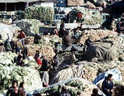[포토] 대한민국자료 - 용산김장시장 전경(1977년)