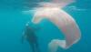 뉴질랜드 앞바다에 거대 생명체 등장…8m 크기에 변신 가능