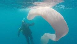 8m 크기에 변신 가능...바다 거대 생명체 등장