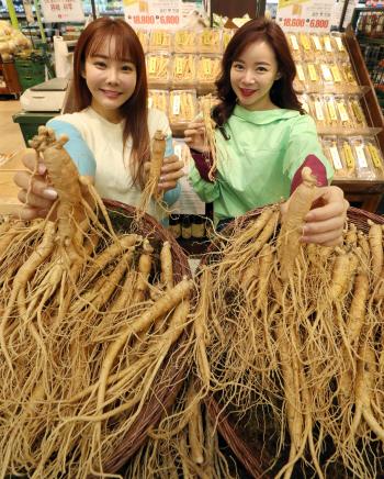 롯데마트, '금산 햇 인삼' 판매