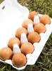 """계란자조금 """"강원도 계란 위생검사, AI 특별방역대책기간 피해야"""""""