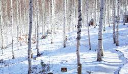 인제 가볼만한 곳, 3대가 즐기는 겨울 여행코스