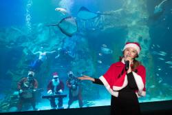 [포토]'크리스마스에 만나는 특별한 수중 퍼포먼스'