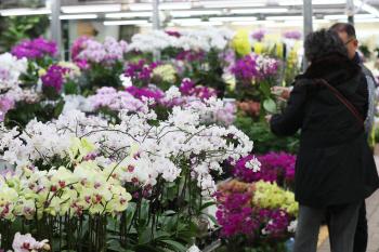 봄꽃 찾는 시민들