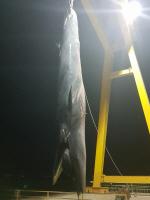 여수 앞바다서 발견...'길이만 10m'
