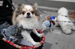 '동물=물건' 민법 고치자…정의당, 동물복지위 발족
