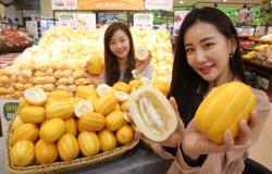 롯데마트, 올해 첫 수확 성주참외 판매