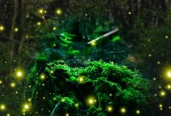 [이연호의 과학 라운지](32)반딧불이의 특별한 결혼 선물