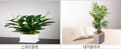 미세먼지 경보 잦은 봄철, 실내 공기정화 효과 식물 인기