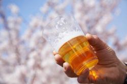 꽃에 취하고 술에 취하고…봄나들이 '술판' 여전
