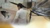 강아지 학대하다 차로 친 50대男…동물단체 엄중 처벌 촉구