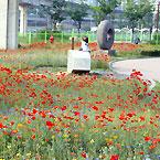 봄나들이 좋은 서울 꽃길