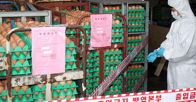 [단독]농식품부 '살충제 계란' 농가<BR>31곳 중 10곳 틀려