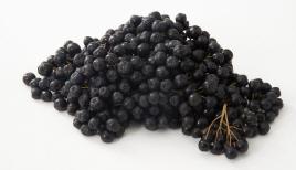 롯데마트, 안토시아닌이 블루베리 4배 '아로니아' 판매