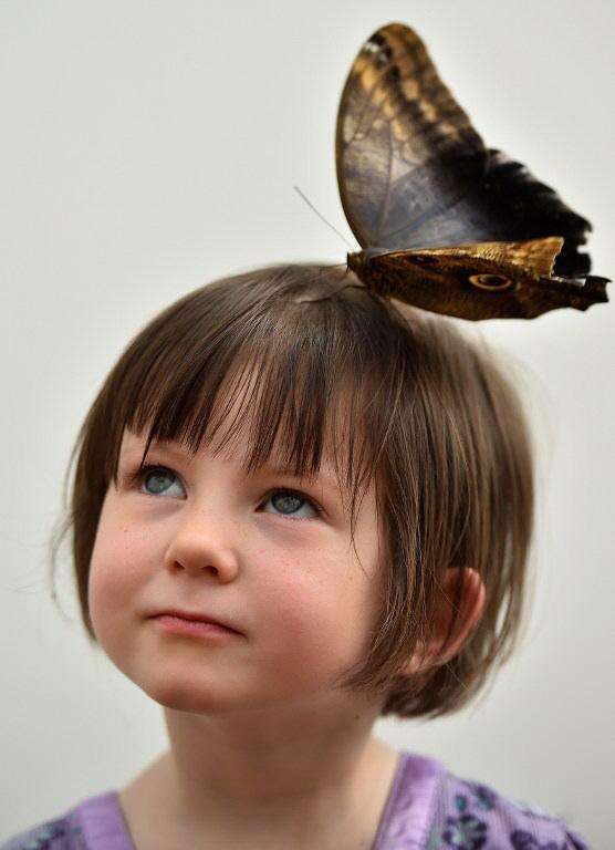 이데일리 - [포토] 어린 소녀 머리 위에 앉은 거대한 부엉이 나비