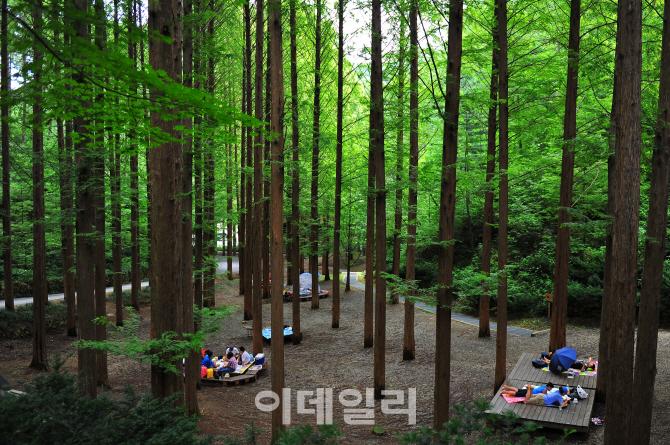 산림청 `산림으로 국가부강을 숲으로 국민행복을`