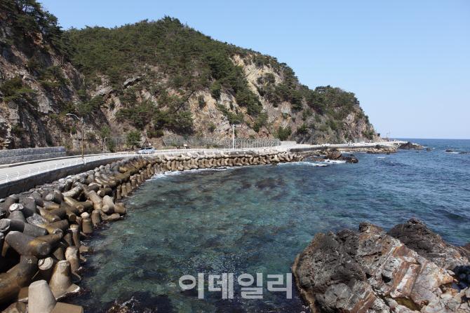 [드라이브①] 해안 비경 품은 환상의 드라이브 '강릉 헌화로'