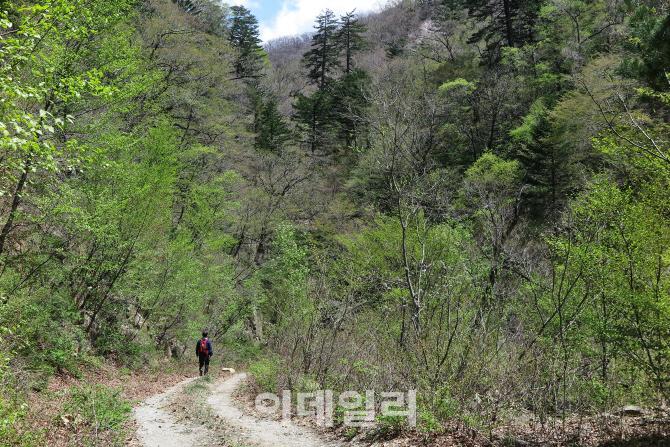 [힐링여행①] 첩첩 산골 은둔의 유토피아 '미천골자연휴양림'
