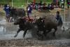 `진흙탕 위를 달려라`…태국서 물소 경주 대회 개최