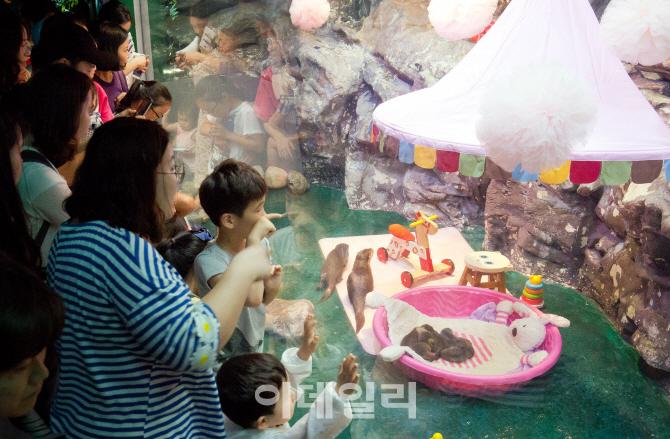 [포토] 앙증맞은 아기 수달