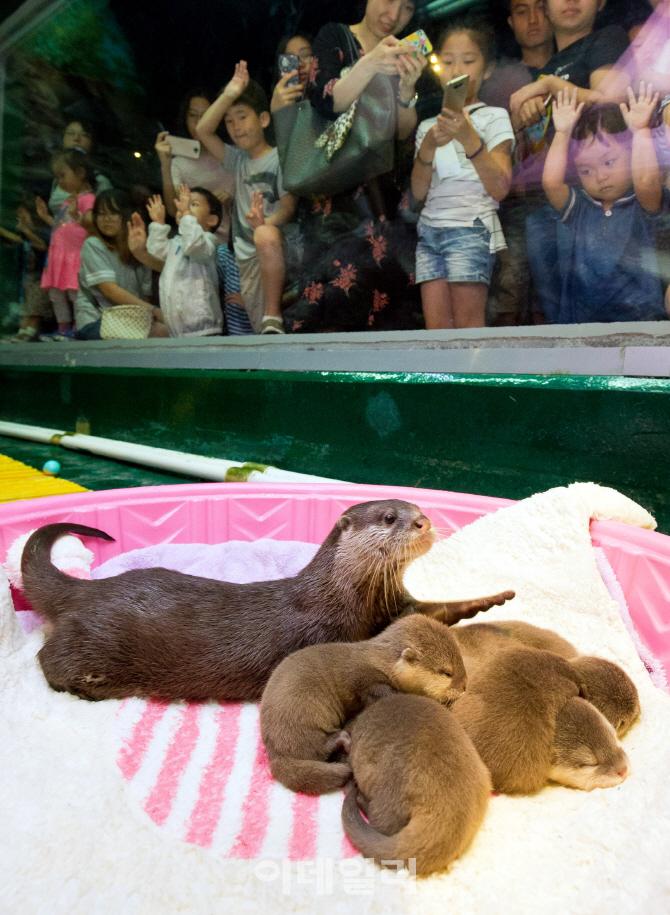 [포토] 아기 수달 5형제