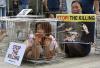 동물보호단체, 개 식용 반대 집회 '이렇게 갇혀 봤나'