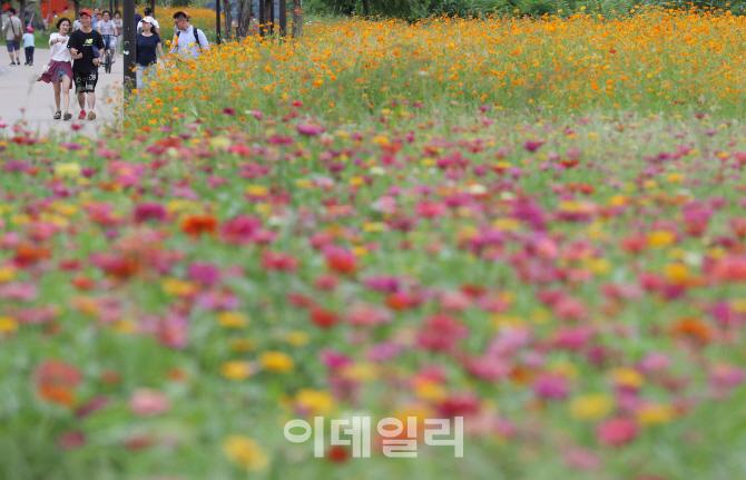 [포토]`한강공원에 찾아온 가을전령사`