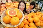 롯데마트 `카라카라 오렌지`