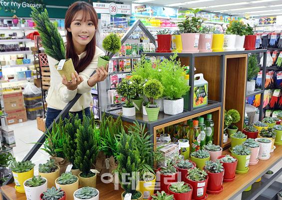 [포토] 다이소, 플랜테리어 다육 식물