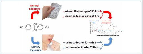 `영수증 환경호르몬`, 먹을때보다 만졌을 때 체내 오래 잔류