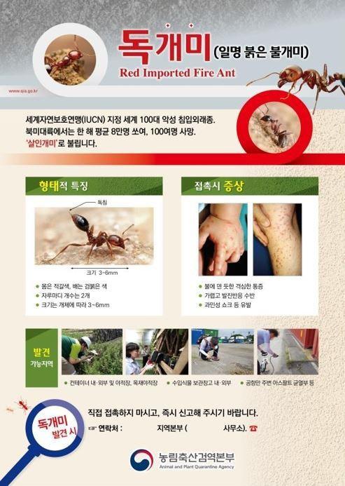 `살인 개미` 붉은 독개미, 국내서도 발견..`만지지 말고 즉시 신고해주세요`