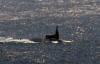 [포토] 부산 입항하는 미 핵 잠수함 미시간