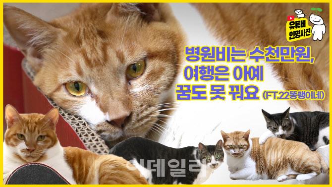 고양이 버릴 거면 입양도 하지 마세요(ft.22똥괭이네)(영상)